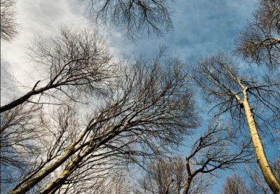 На территории кемеровского университета появится дерево дружбы России и Германии