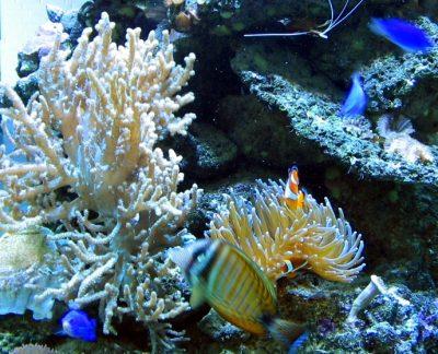 Окаменевшие кораллы, возрастом несколько миллионов лет, нашли в Кузбассе
