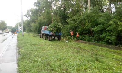 За день кемеровские коммунальщики выкорчевали 101 аварийное дерево