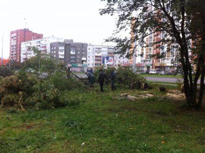 В Кемерове проспект Шахтёров остался без деревьев