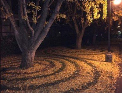 Американка создаёт узоры из опавших листьев и публикует их в Сети