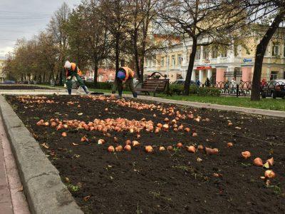 Более миллиона цветов высадят в Кемерове к 100-летию города