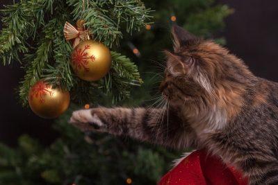 Когда Кемерово «переоденется» к Новому году