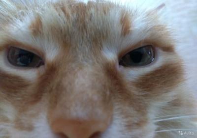 Кемеровчанин продаёт кота-разрушителя почти за 200 тысяч рублей