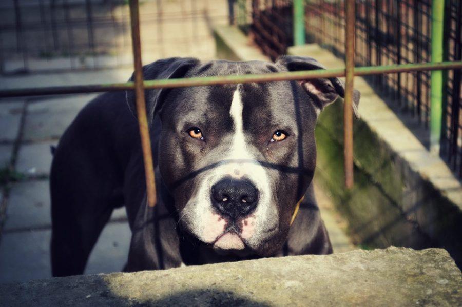 Как в фильме ужасов: в Кемерове бойцовская собака напала на детей