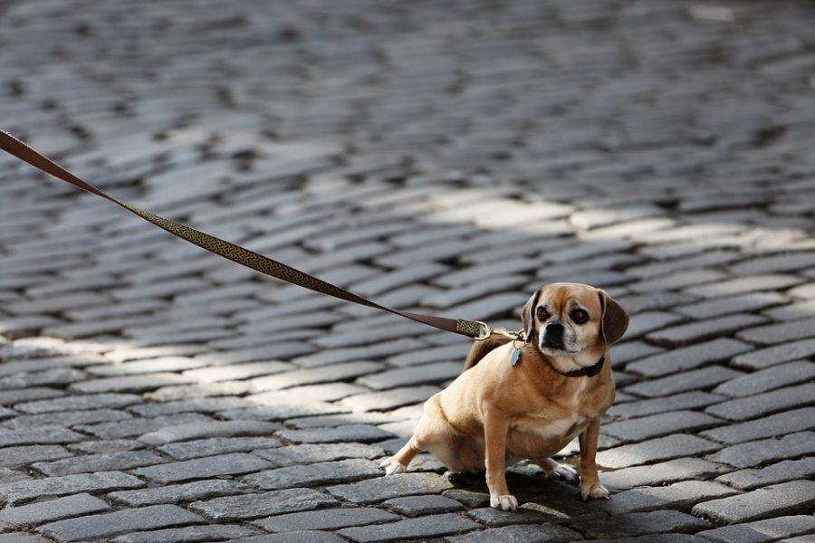 Кузбасский подросток пропал без вести вместе с собакой