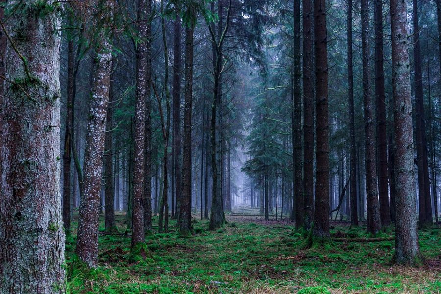 В Кузбассе ребёнок заблудился в лесу
