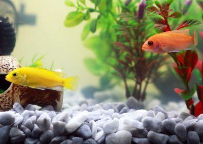 Кузбассовец продаёт маленький аквариум за 650 000 рублей