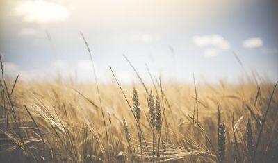 В Кузбассе работникам фермы не платили зарплату