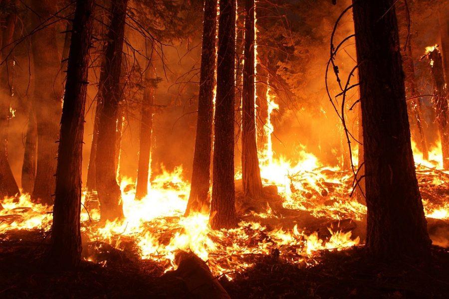 В Кузбассе сгорело полмиллиона гектаров тайги