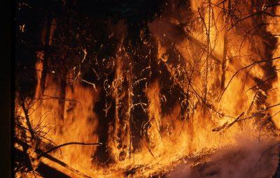 Америка хочет вмешаться в ликвидацию лесных пожаров в Сибири