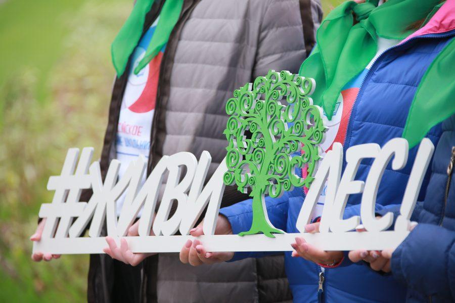 «Живи, лес!»: в Кузбассе массово сажают деревья