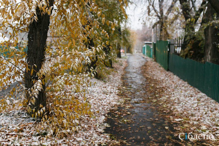 Снежный Кемерово: в столице Кузбасса выпал первый снег