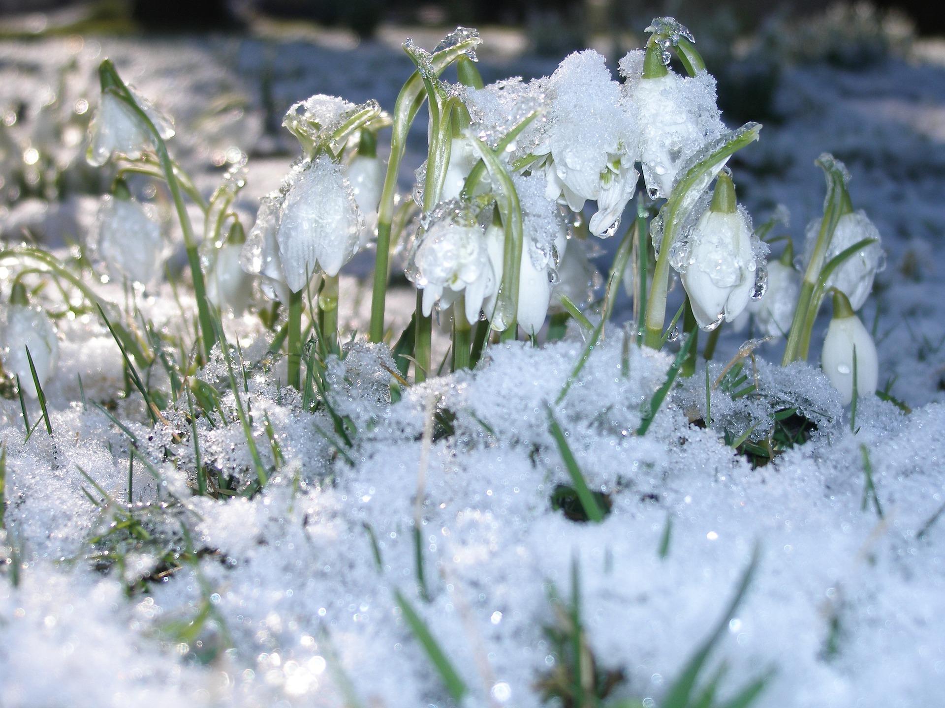 поздравления весенний снег картинки коттеджи дома