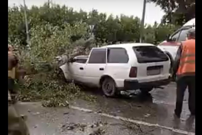 Видео: в Новокузнецке огромное дерево упало на легковой автомобиль