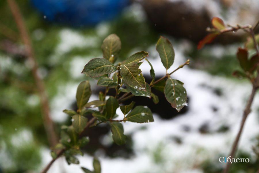 Штормовой ветер и похолодание надвигаются на Кузбасс