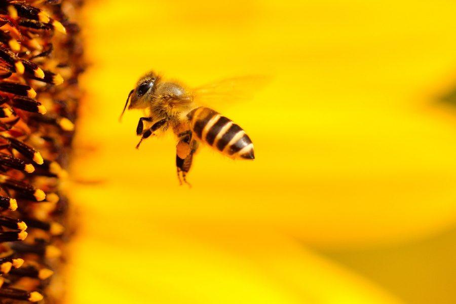 В Кузбассе смерть пчёл оценили в 10 тысяч рублей